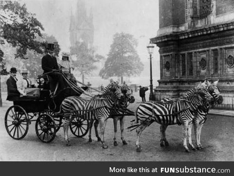 Zebra-drawn carriage parked outside Buckingham Palace in London, c.1900