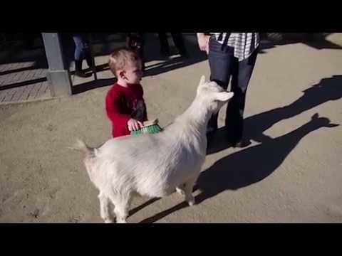 Goat fart scares kid