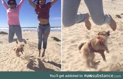 When you accidentally kick your dog while trying to take a cool picture.