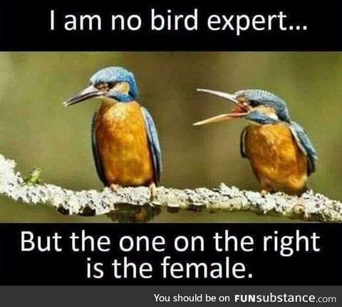 Female bird