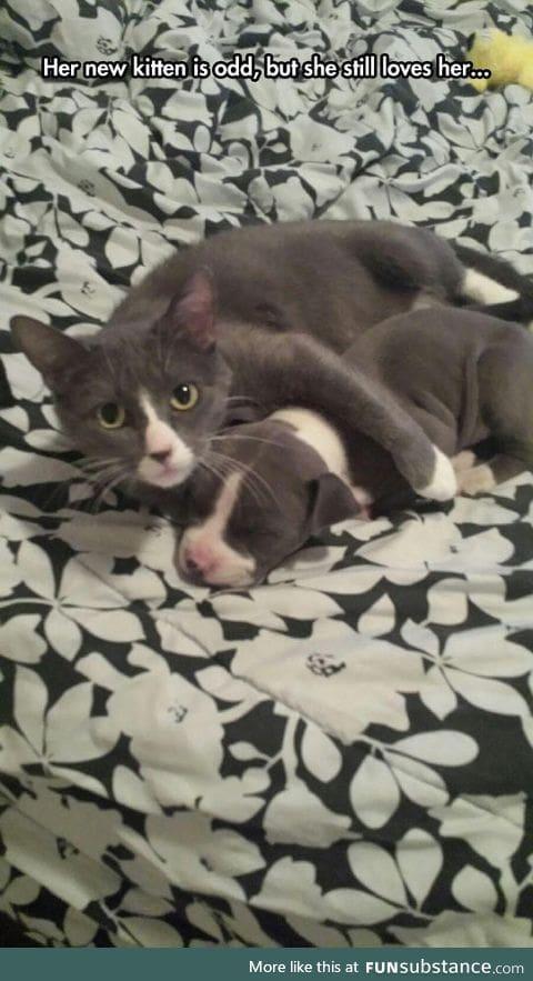 Odd kitten