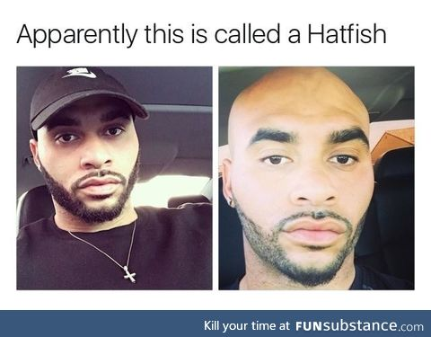 What is a hatfish
