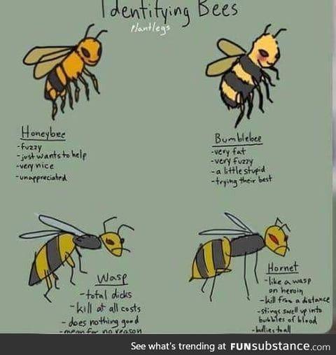 Identifying bees