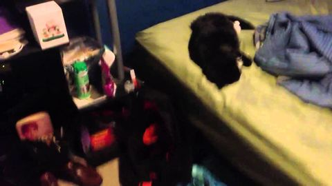 Waking up cat with firecracker