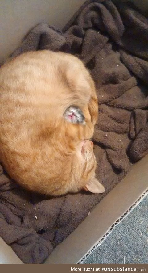 Mama cat protects her one and only baby.