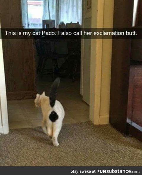 Funny spot for black fur