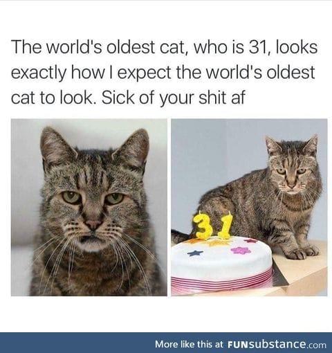 World oldest cat