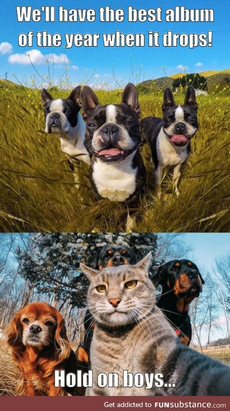 3BTs (stands for 3 Boston Terriers) vs PBs (P*ssy B*tches)