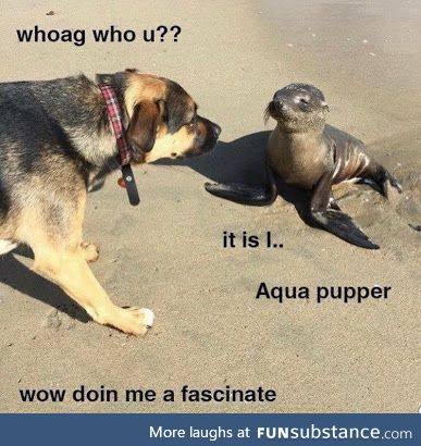Very fascinate bout water pupper