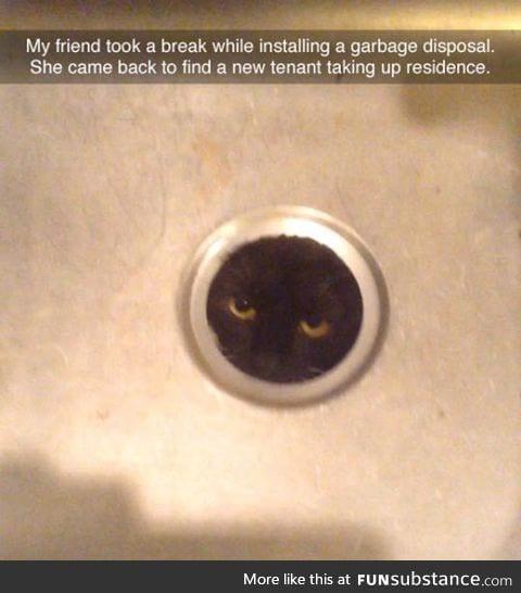 New tenant