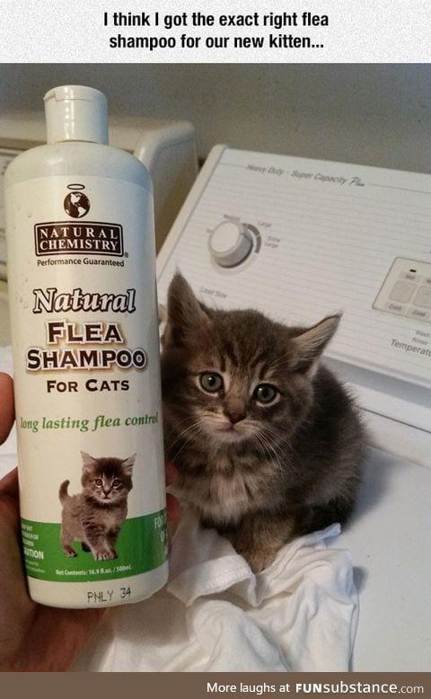 The right flea shampoo