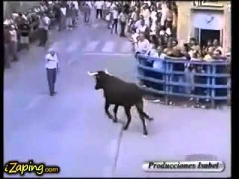 Bull recognizes the man who fed him