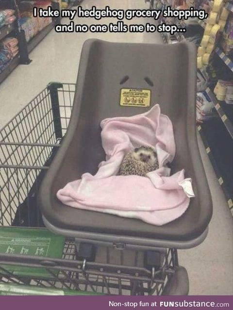 Grocery shopping with hedgehog