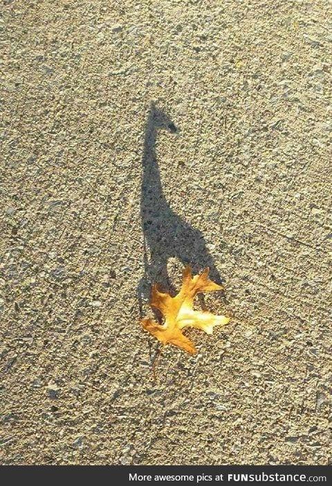 This leaf wishing it were a giraffe
