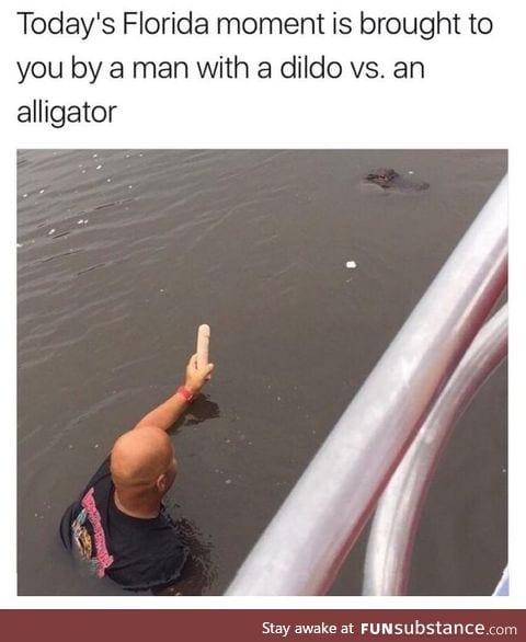 Florida ma  vs alligator