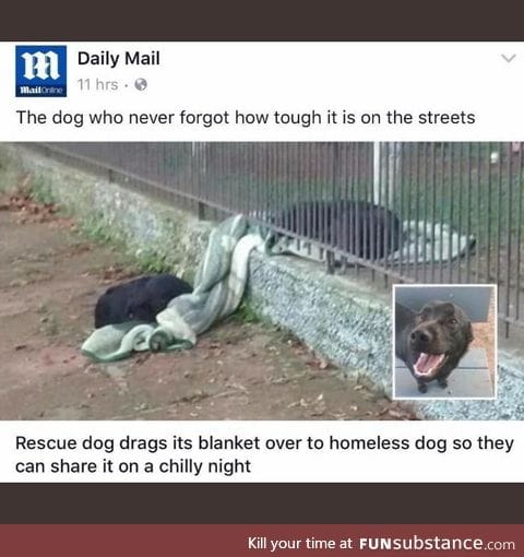 How can dogs be so pure?