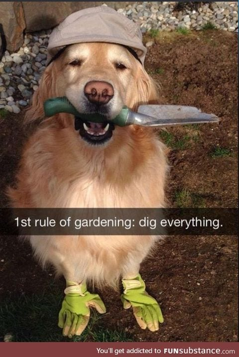 Doggo does a horticulture