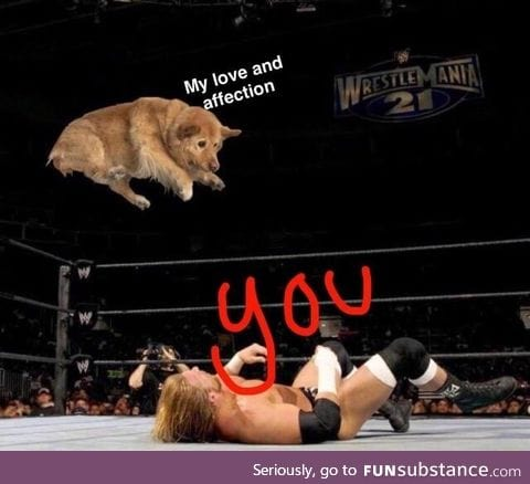 How your dog feels about you