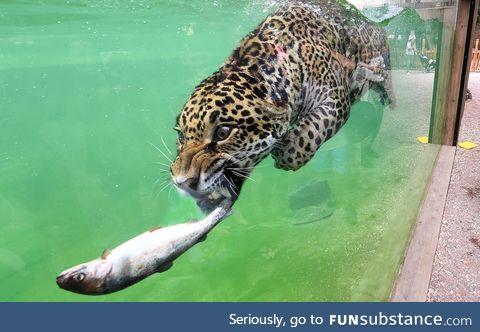 Fish for dinner