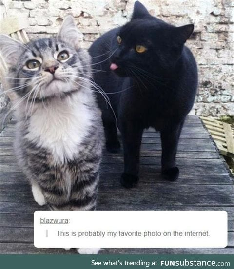 It's now my favorite photo on the internet.