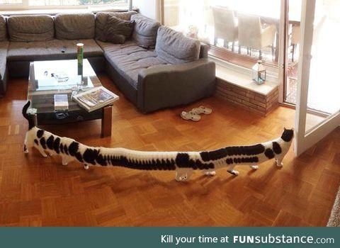 Panoramic Centi-cat