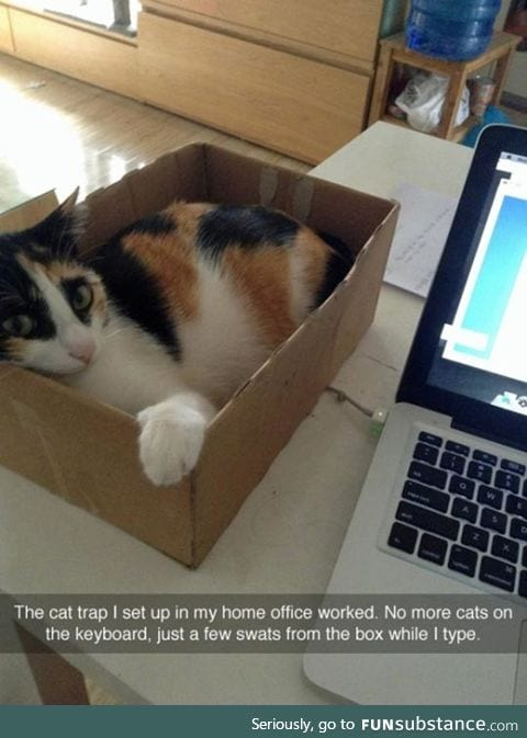 The cat trap worked