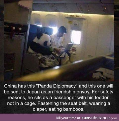Panda flies an aeroplane like a human