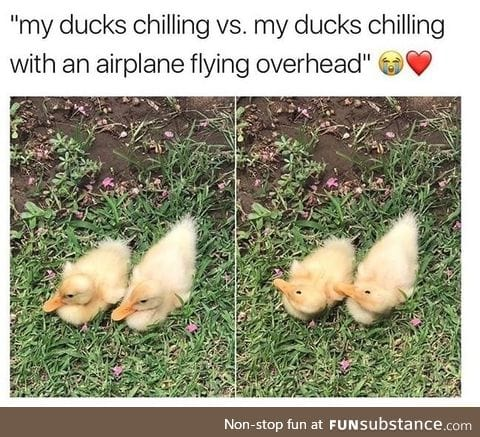 Ducks chilling