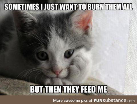 Contemplative kitten has a dilemma