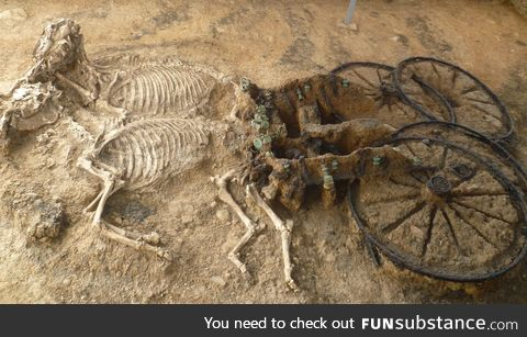 2,000-year-old Thracian chariot and horses found in Bulgaria