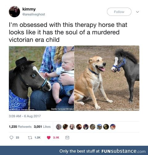 A Gentle Carousel Miniature Therapy Horse... Or is it?