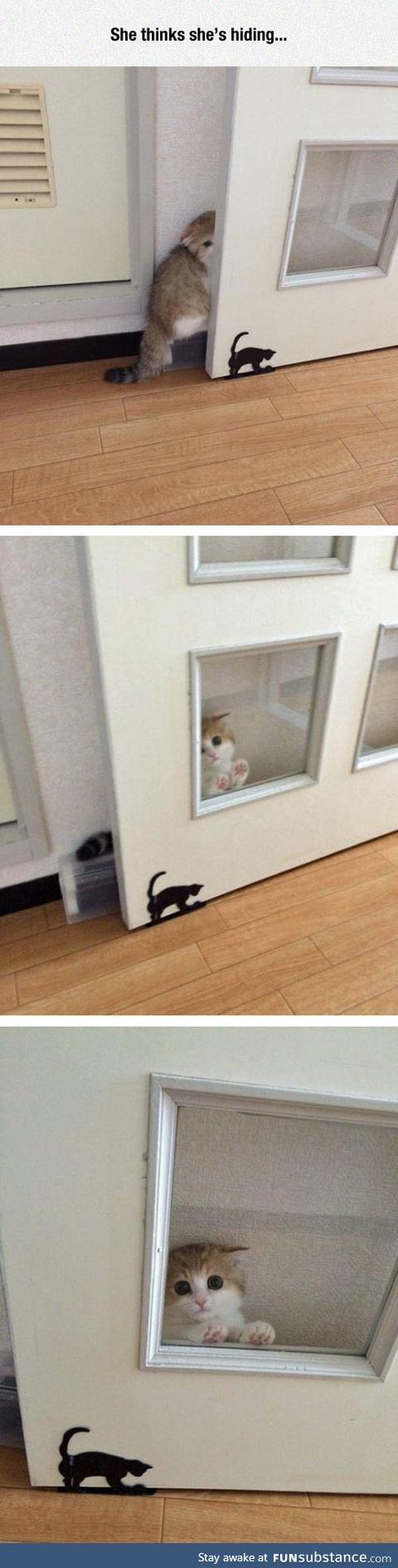 I see no kitty