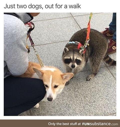 2 cute dogs