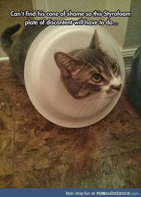 When You Just Can't Find The Cone Of Shame