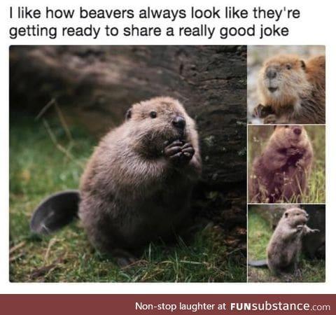 Beaver jokes