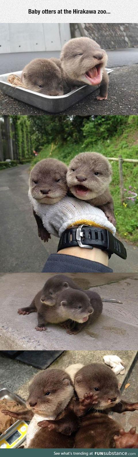 Tiny baby otters