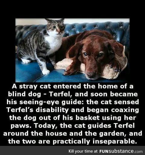 We don't deserve animals
