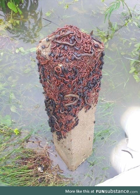 Insects looking for shelter after a flood