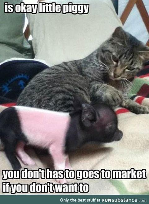 Don't Worry Piggy