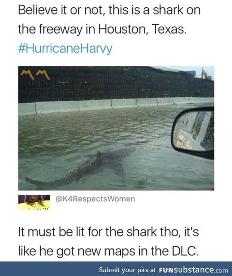 Shark found in Houston