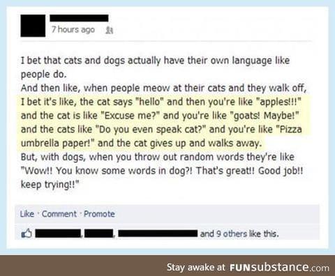 Do you even speak cat, human?