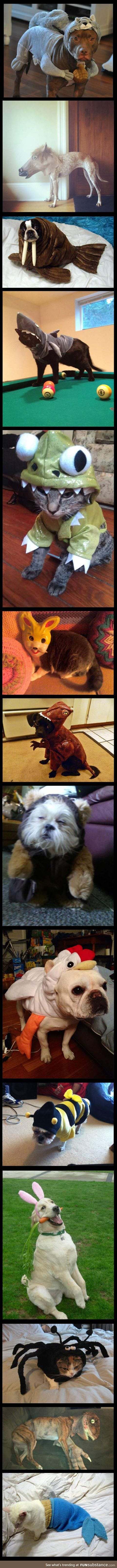 Animals pretending to be other animals