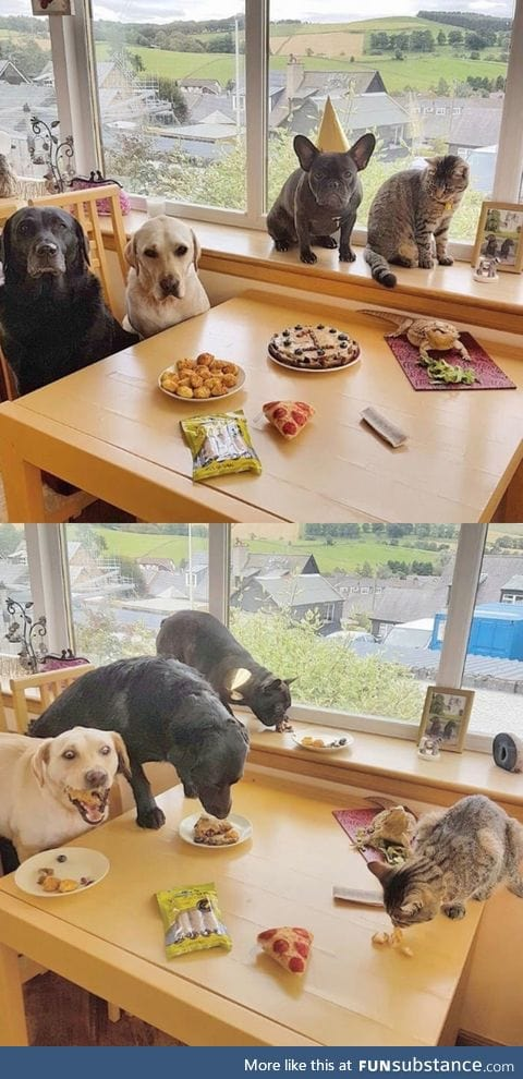 Dog had a birthday party
