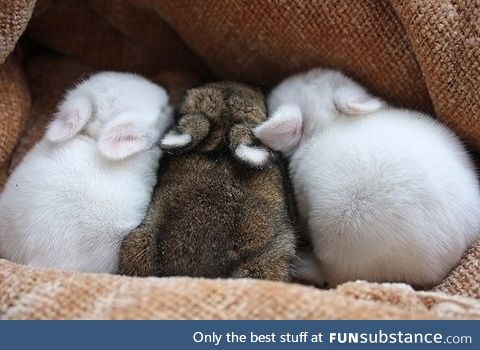 Snug Bunnies