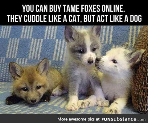 Now I'm Getting A Fox