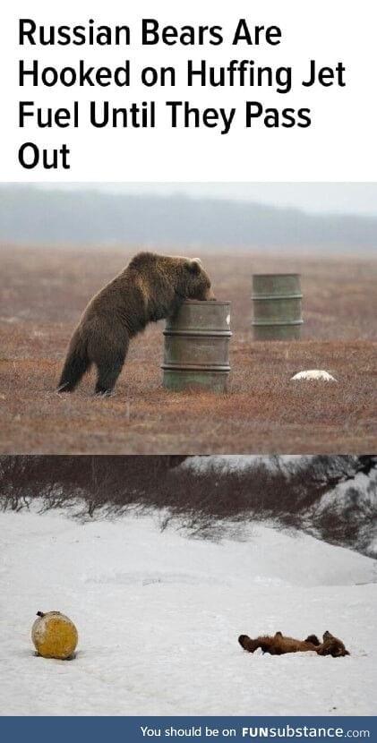 Bears wanna get high too