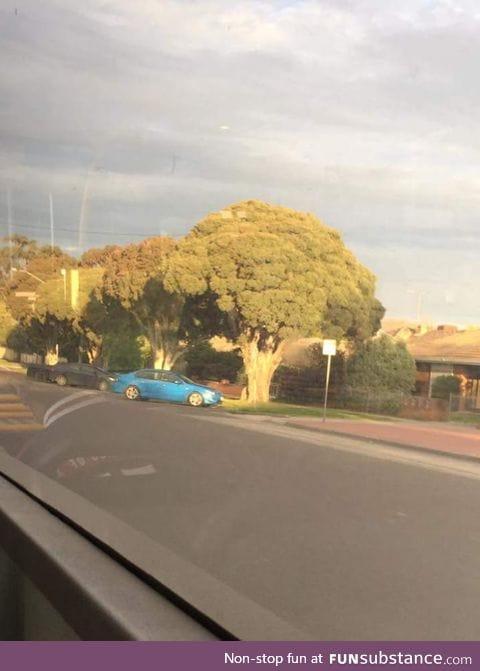 This tree looks like straight up broccoli
