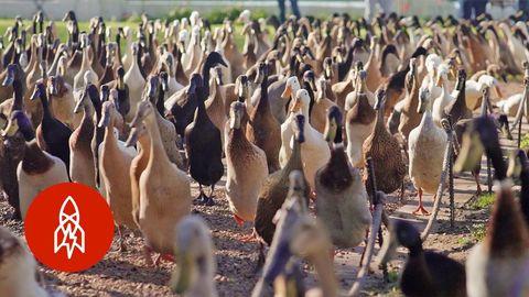 """""""Got a Pest Problem? Call the Quack Squad"""""""