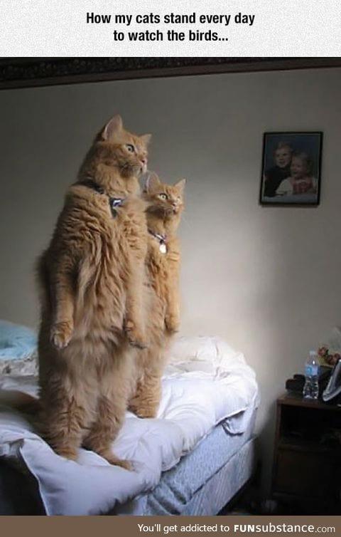 Curiosity made the cat act weird