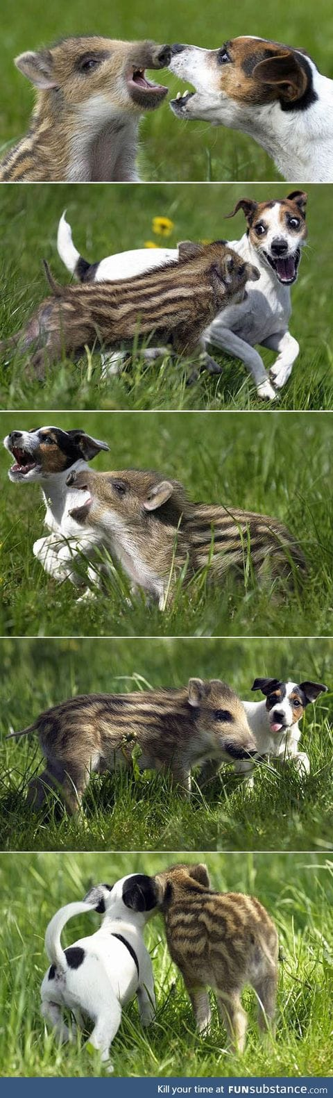 Quite the unlikely friendship
